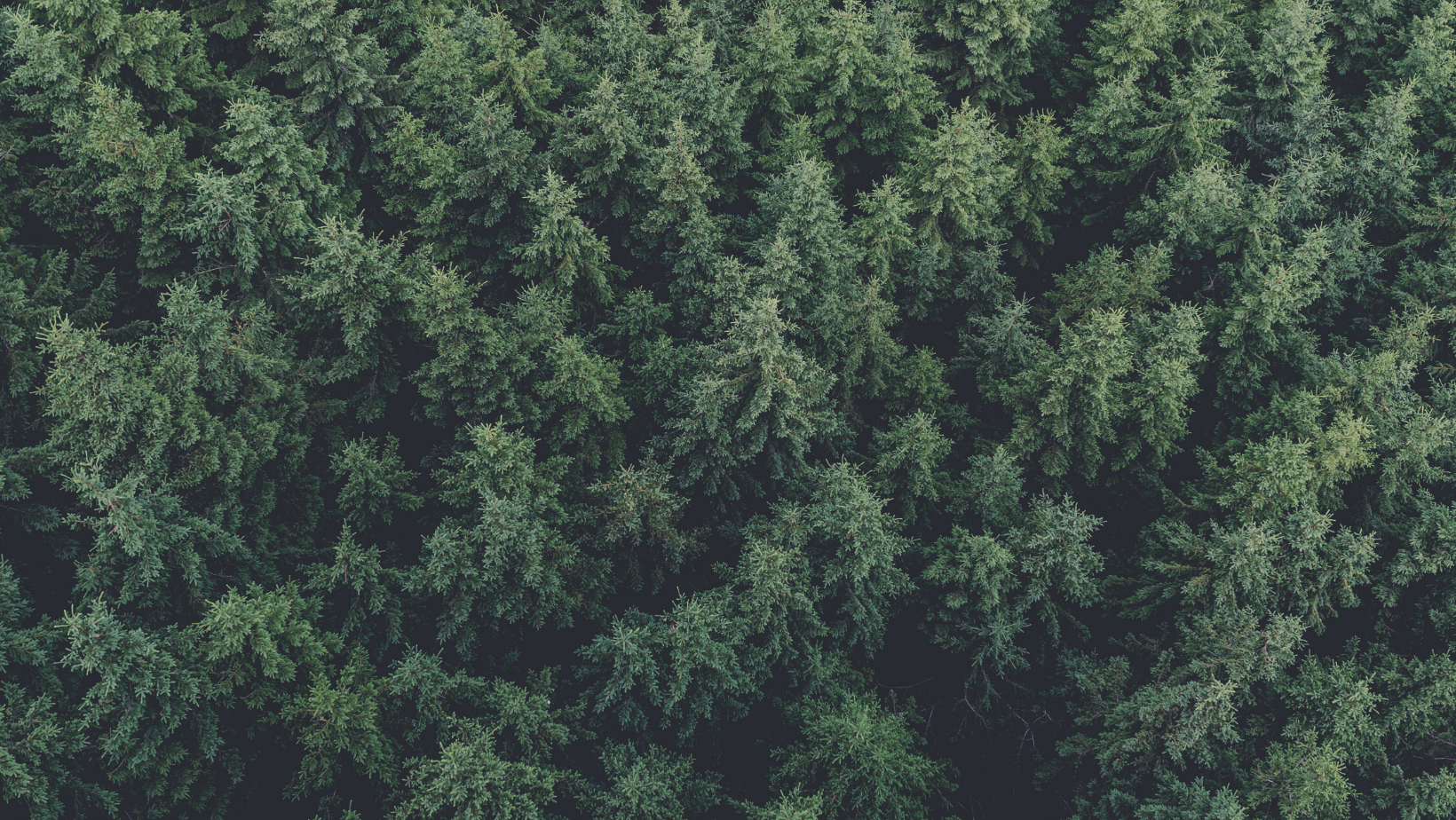 iov42, Preferred by Nature, and Carl Ronnow sign MOU to bring transparency and accountability to timber market